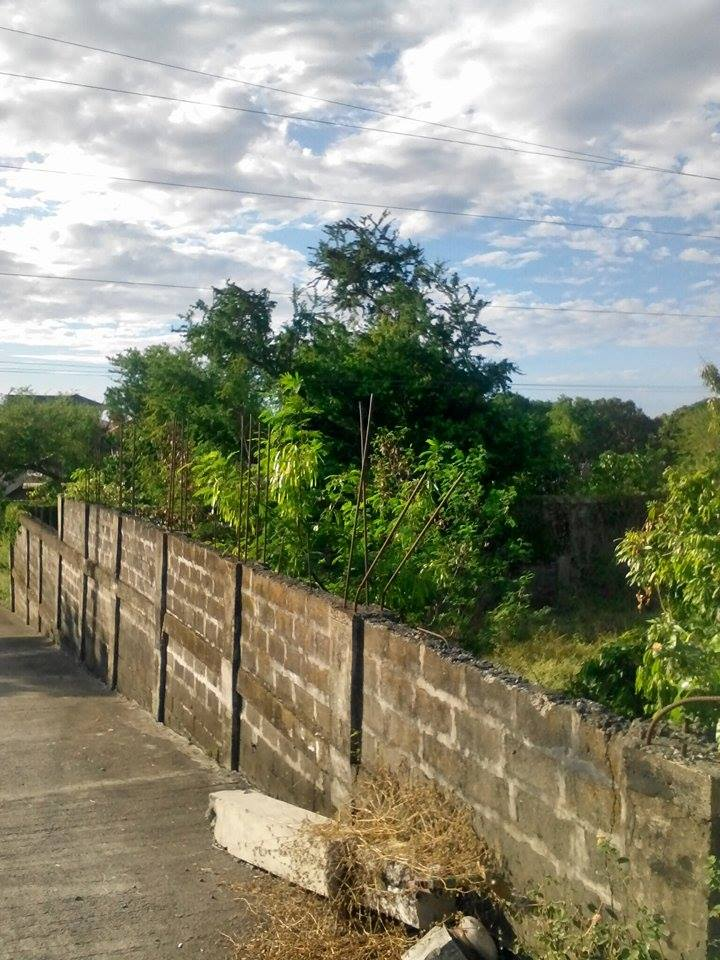 500 Sqm Along the Road Lot For Sale in San Juan La Union