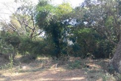 6 Hectares Farm Lot for Sale in La Union Philippines (Bauang)