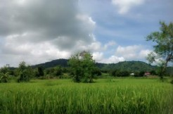 Farm lot for sale, 19 Hec. Balaoan, Camiling