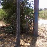 185 Sqm Beach lot for sale Tammocalao, Bacnotan