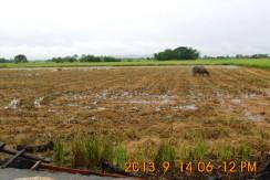 Rush sale Titled Farm lot in Pangasinan