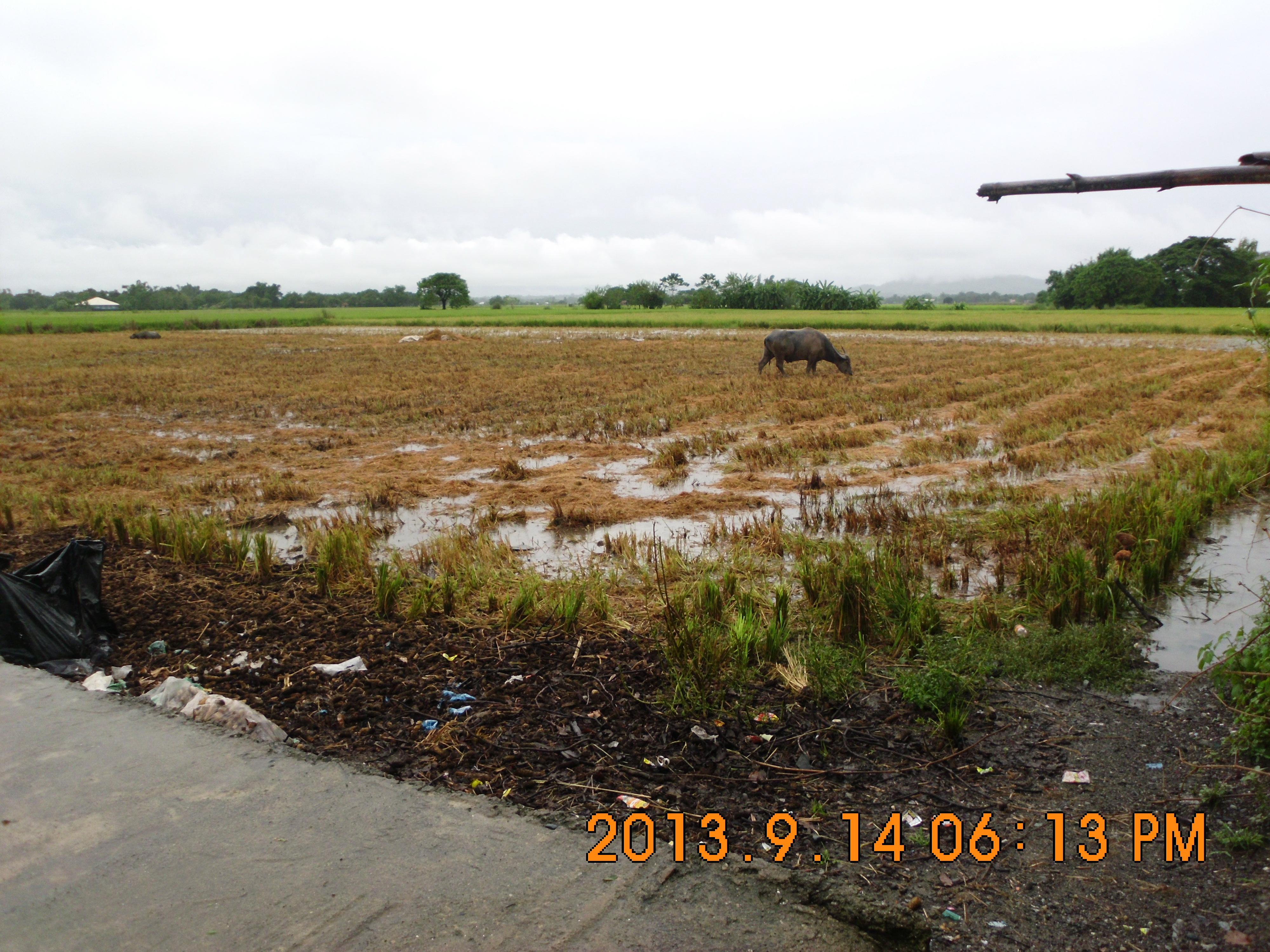 rush sale titled farm lot in pangasinan  u2013 capstone realty