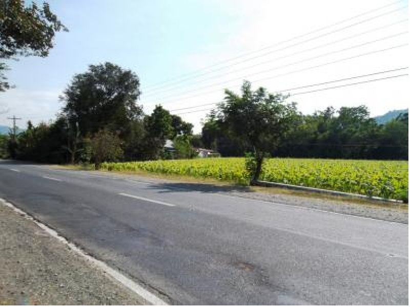 Rush Sale 5,656 Sqm Balaoan, La Union, Ilocos Farm Lot (SOLD)