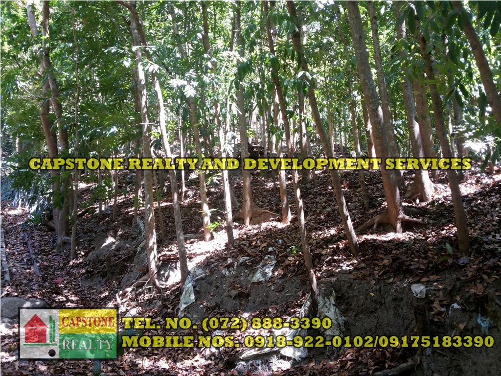 3.2 HEC LIVESTOCK FARM WITH TREES IN BACNOTAN, LA UNION
