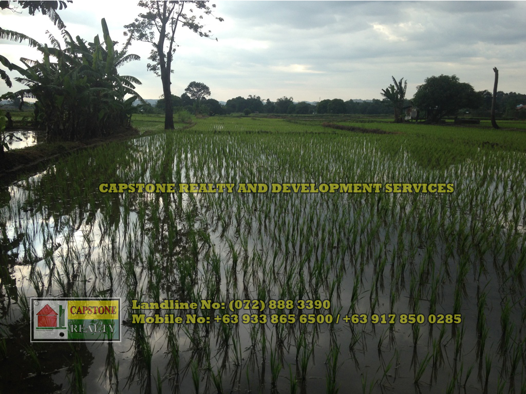 Titled Agricultural Lot for Sale, Rosario, La Union